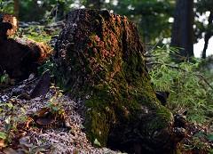 NPO伝統木構造の会HPへようこそ! 写真